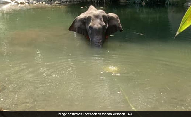 The elephant stands in the Velliyar River.